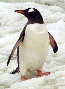 Help Send a Blogger to Antarctica